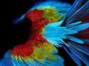Perroquet Photos multicolores Sølve Sundsbø