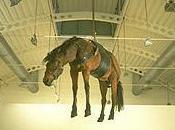 L'art contemporain, taxidermie chevaux.