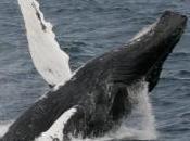 gouvernement japonais veut empêcher navires anti-chasse baleine faire plein