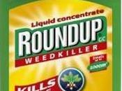 Roundup, herbicide dangereux pour santé
