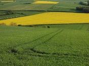 L'Auvergne rurale