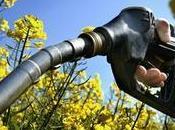 Biocarburant L'E10, nouveau carburant irrite écologistes