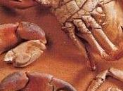 Découpage d'un crabe