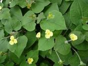 Toujours plus fleurs Saruma