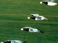 baie Somme, royaume lumière oiseaux