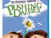 Blu-Ray Pushing Daisies