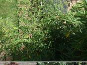 Terrasse bois Phase #apéro