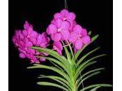 Quelle plante offrir pour fête Mères