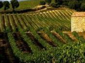 découverte vignoble Corse