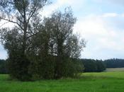 Forêts durables espaces naturels luxembourgeois