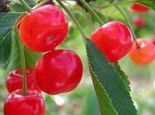 Fraîcheur griottes d'amandes fleurs d'oranger