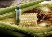 Conseil d'Etat fait toute lumière champs d'OGM....