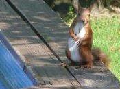 google bienbienbien pour pacajob d'écureuil