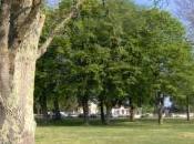histoire d'arbres notre boîte mail