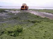 Marées vertes Eaux Rivières Bretagne obtient justice