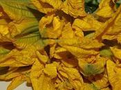Fleurs courgettes farcies