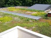 Idée n°12 toit végétal dans ville