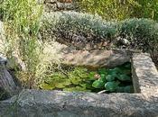 Bassin Jardin entretien nettoyage d'automne !...