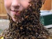 abeilles, espèce voie disparition
