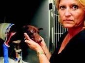martyre d'un chien errant déchaîne colère village