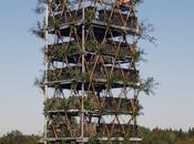 Architecture végétale: projet Baubotanik