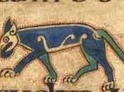 L'âne loup Mont-Saint-Michel