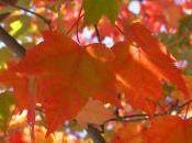 Cocktails couleurs l'automne