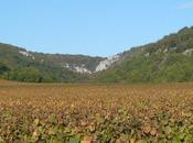 Miscellanées Burgundy