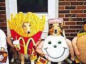chiens Navarre fêtent novembre