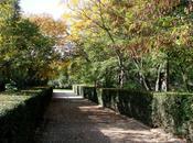 Automne Jardin Thabor Rennes (2/2)