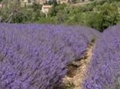 salon Provence Prestige Arles