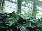 Jardin plantes Grenoble