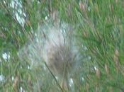 Guettez nids chenilles processionnaires formation