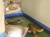 L'aquarium national Santo Domingo