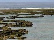 plongée apnée facile Okinawa