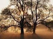 Planter arbre pour Terre