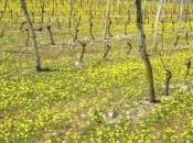 subventions pour soutenir filière viticole midi-pyrénéenne
