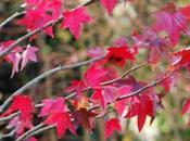 Quelques photos d'automne…