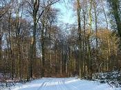 Forêt d'Halatte sous neige