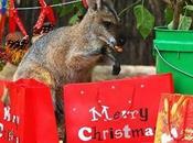 Noël animaux