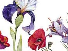 Légendes fleurs, Michel Corinne Merles
