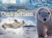 Création Nicolas Affiche Ours polaire