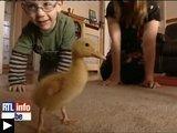 Videos insolites: canard aide enfant marcher pigeon prend metro chouette danseuse