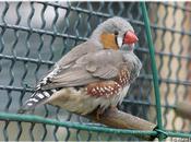 Oiseaux exotiques Jardin Thabor Rennes (3/4)