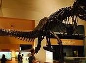 faim dinosaures