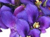 violette Toulouse disparait