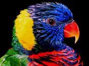 diarrhées chez oiseaux