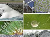 Quand biomimétique s'inspire nature