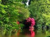 Comment créer votre jardin anglais