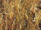 L'art camouflage animal